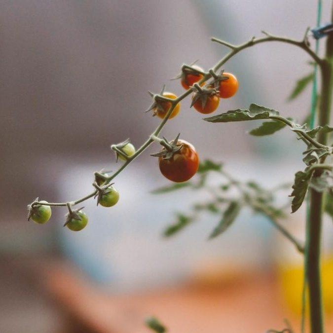 Produzir alimentos naturais
