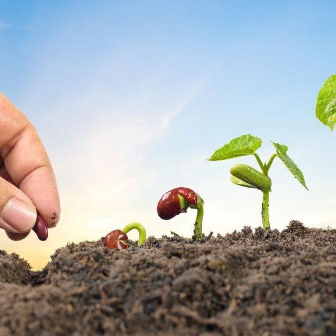 Como iniciar o plantio de alimentos saudáveis